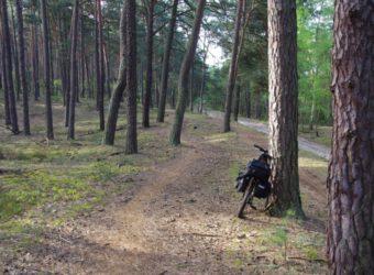 Rower-w-kampinosie