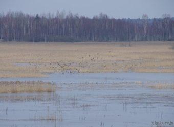 Zalew-Siemianówka